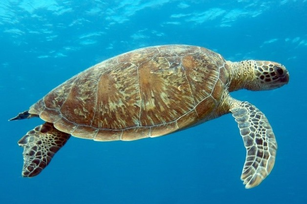 Turtle research papers